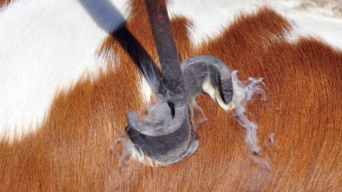 La 'Brand' (marca), viene del término vikingo 'Brandr' (quemar), porque era como 'marcaban' el ganado