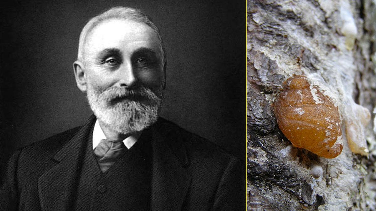 John B. Curtis es considerado el inventor del primer chicle comercial de EEUU