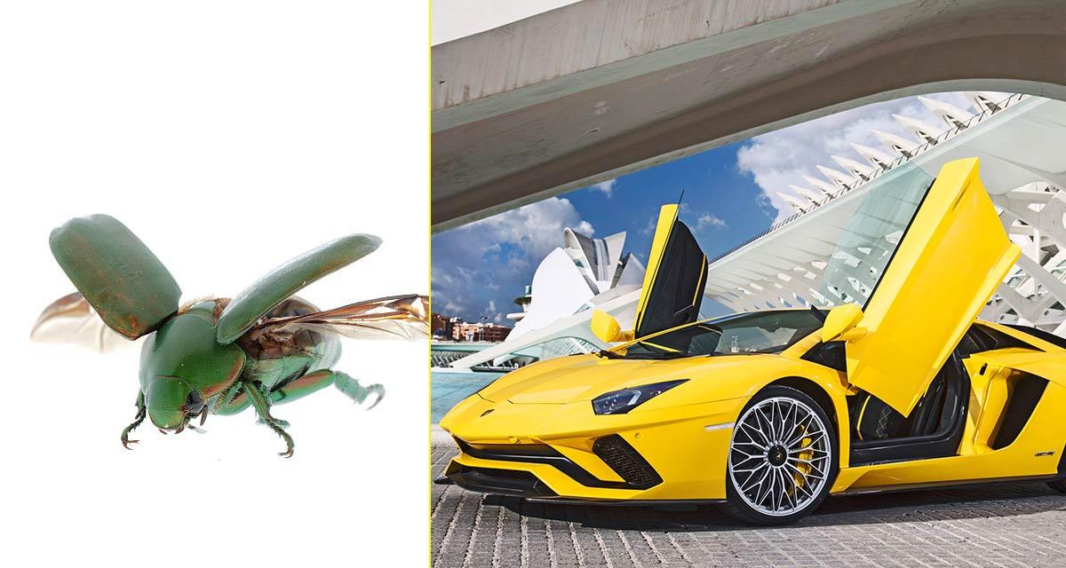 El Aventador está inspirado en un escarabajo volador (Anomala Cupripes)