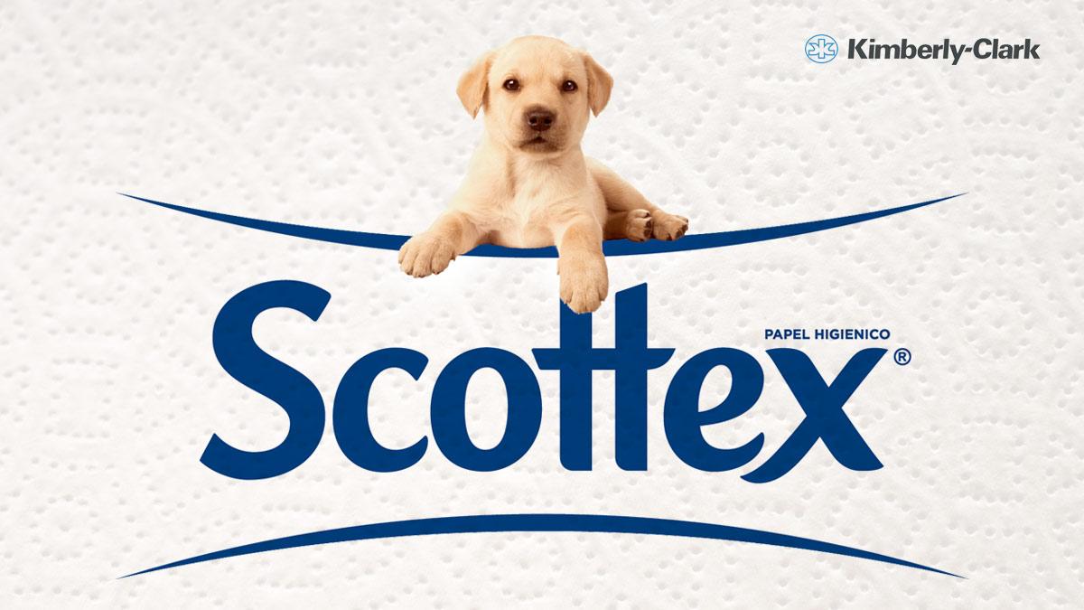 Podcasts / Scottex y el origen del papel higiénico