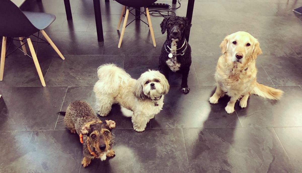 De izquierda a derecha: Chola (CEO), Niebla (CTO), Enzo (CFO) y Sugar (COO) (falta uno, curra en remoto)